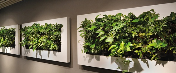 Green wall designs sustainable living plant wall design for Livyng ecodesign