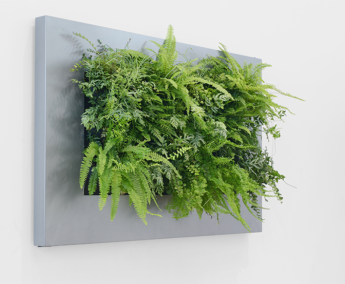 Green Wall Plant Paintings By Green Wall Designs