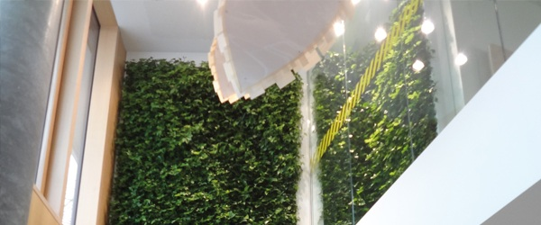 Sustainable Plant Wall